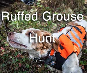 Ruffed Grouse Hunt